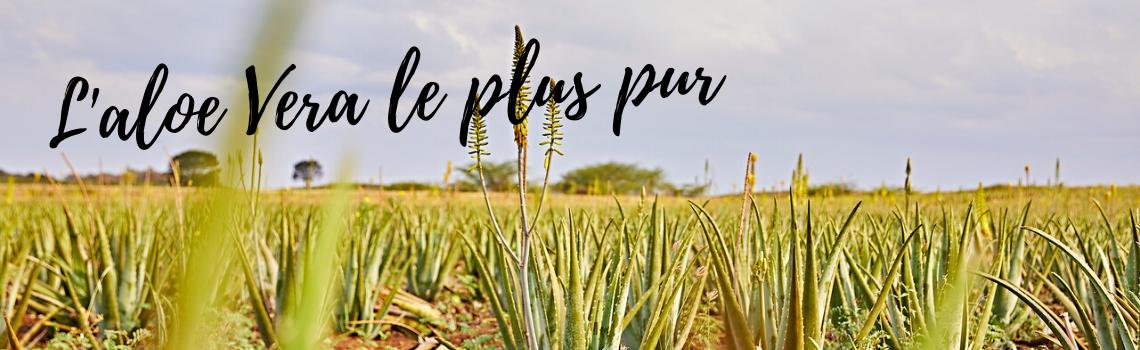 Les produits Forever contiennent les pourcentages d'Aloe les plus elevés !
